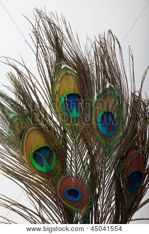 Five peacock feathers
