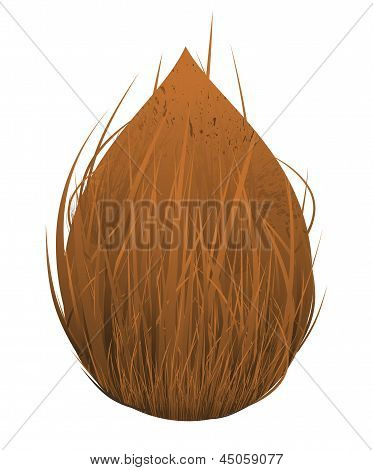 Abstract Plam Coconut Fruit