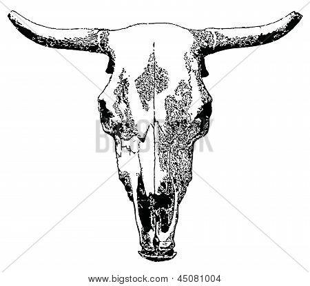 Livestock skull.