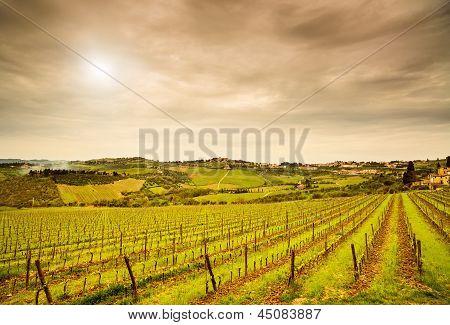 Chianti Region, Panzano Vineyard, Trees And Farm On Sunset. Tuscany, Italy