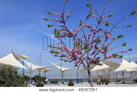 Tsersis Tree And Tent In Izmir