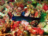 The surprising underwater world of Philippine sea, island Mindoro, sea slug poster