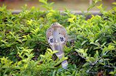 wild spectacle cobra snake in indian jungle poster