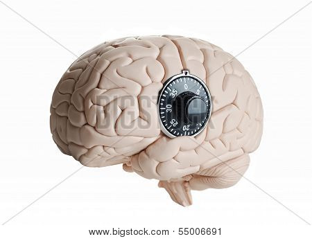 Human brain model with a dial lock poster
