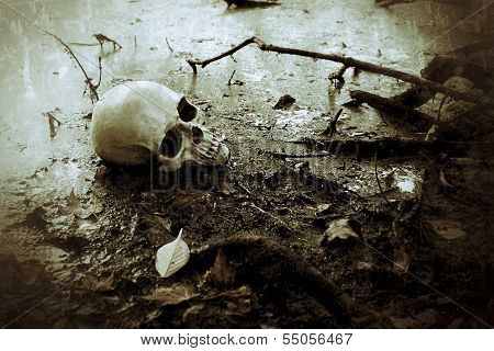a skull set in the swamp