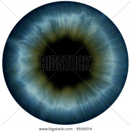Pupil
