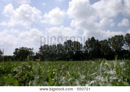 Landscape Grass Field