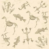 animals anatomy, skeleton of horse, pigeon, frog and turtle, archeology biology or history pattern poster
