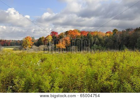 Field in Autumn