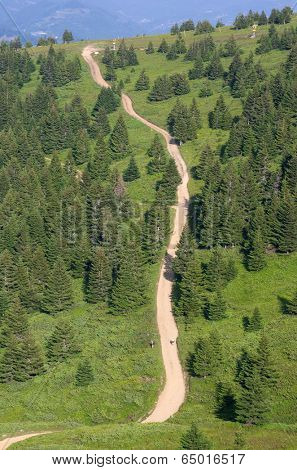 sinuous trail crosses fir woods of Kopaonik National Park, Serbia
