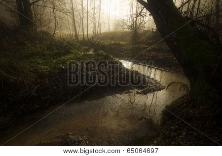 River in a forest with fog in autumn