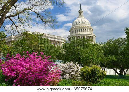United States Capitol - Washington D.C. USA