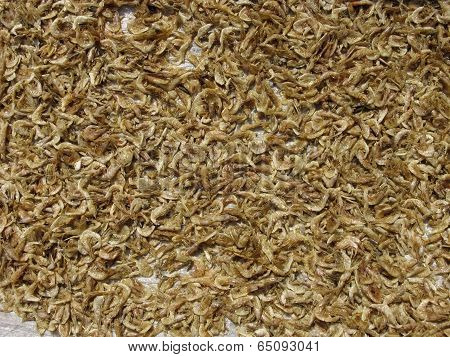 Small Fishes Are Spread For Drying