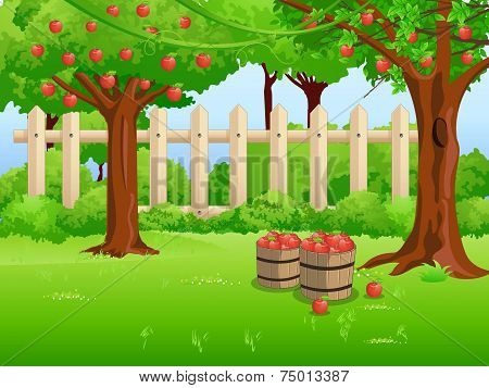 Apple Trees In The Garden