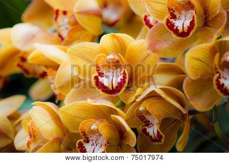 Beautiful yellow orchid flowers