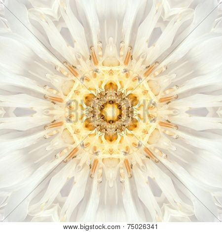 White Mandala Flower Center. Concentric Kaleidoscope Design