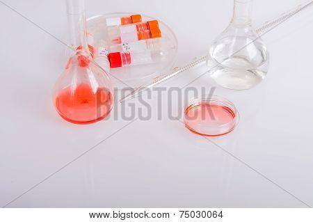 Plastic dish on biomedical scientific laboratory.