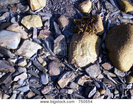 beach rocks and seaweed
