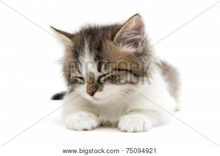 poster of sleeping small fluffy kitten isolated on white background close-up. horizontal photo.