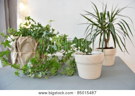 Houseplants on a gray table