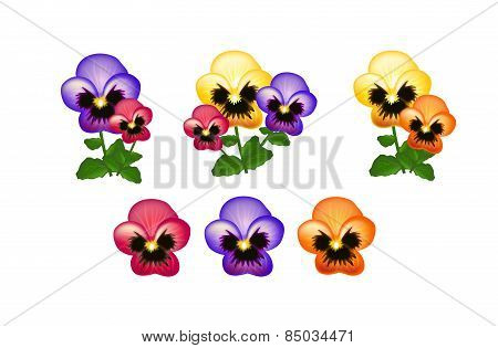 Colorful Heartsease