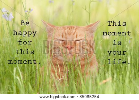 Be happy for this moment. This moment is your life - an inspirational quote by Omar Khayyam, with an image of a happy orange cat in green grass