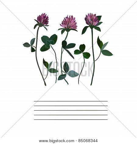 Clover flowers notebook