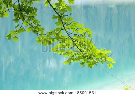 green leaves tree branch against reflection of the woods on the Black Lake surface in Durmitor National Park, Zabljak