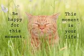 Be happy for this moment. This moment is your life - an inspirational quote by Omar Khayyam, with an image of a happy orange cat in green grass poster