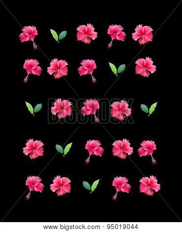 Carmine red hibiscus flower wall