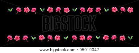 Carmine red hibiscus flower margin