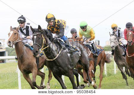 Tough Race Between The Race Horses