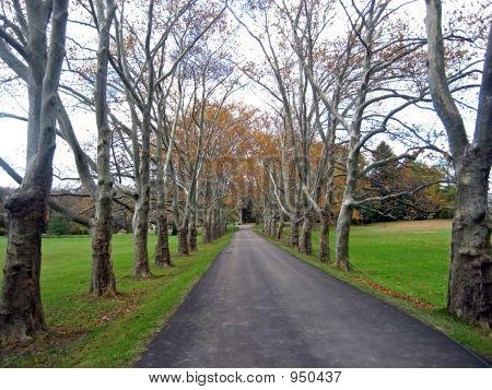 Grand Tree Lined Driveway