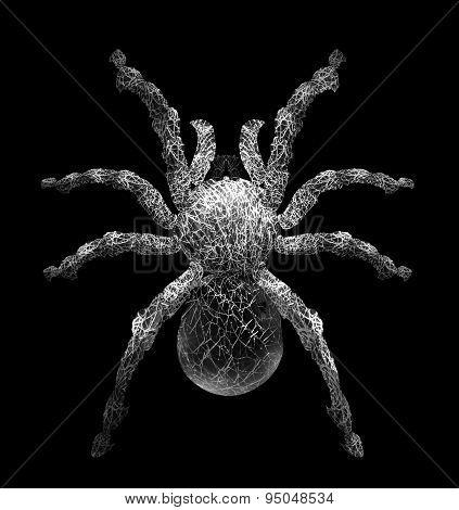 Tarantula Spider In Cobweb Form.it Isolated On Black ,give Feeling Creepy Haunted