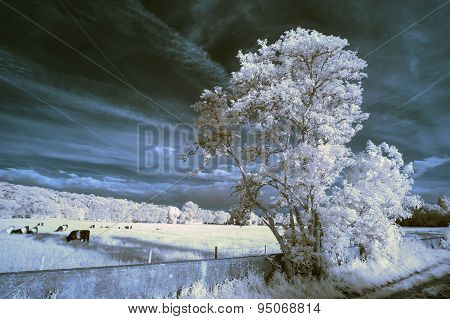 Stunning Beautioful Unique Infra Red Landscape With False Color Impact