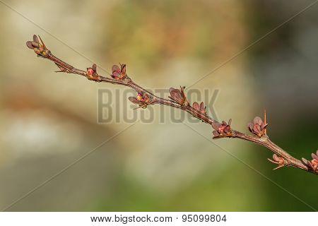 Tree Branch In Spring