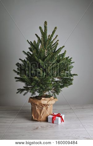 Christmas gift in a white box with a red bow on the floor next to a small undecorated Christmas tree in a pot on light gray background.