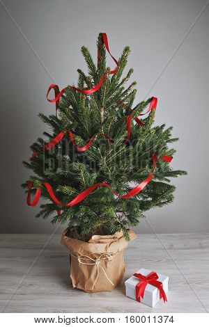 Lush and gorgeous little Christmas tree in a pot wrapped in brown paper decorated with one long red ribbon with one small present isolated on white.