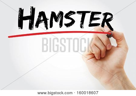 Hand Writing Hamster With Marker
