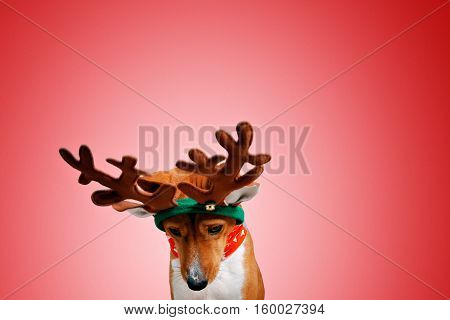 Close up portrait of funny beautiful dog wearing christmas deer costume, looking down side , isolated on festive red background