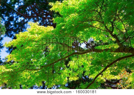 Close Up Of Tree Branch With Bright Green Leaves