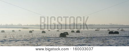 Countryside landscape by winter. Hay bales or sheafs in a cold misty morning
