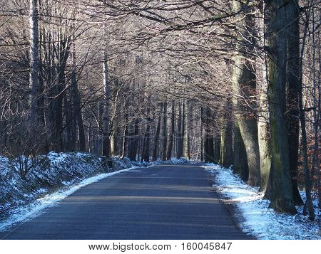 Empty road in wooden avenue in BIELSKO-BIALA with two rows of trees sides in cold winter day, POLAND, DECEMBER 2016.
