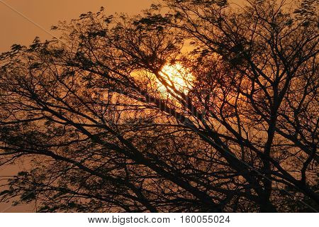Beautiful sunset reflecting its light on a huge tree causing a silhouette