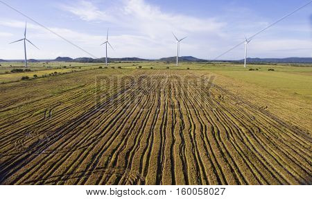 Aerial view of a harvested rice field near a wind turbine farm