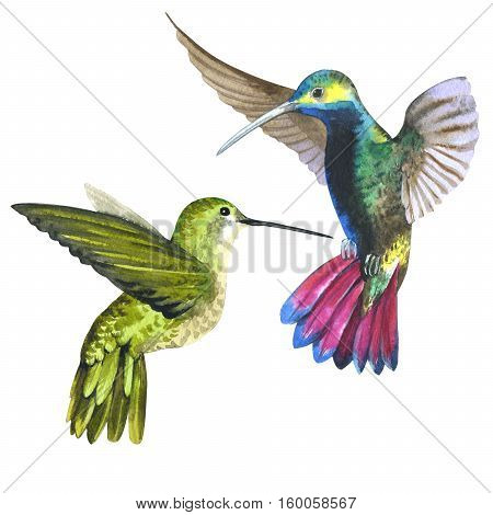 Sky bird colibri in a wildlife by watercolor style isolated. Wild freedom, bird with a flying wings. Aquarelle bird for background, texture, pattern, frame, border or tattoo.