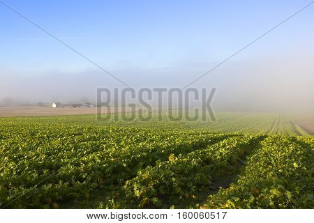 Fodder Crops And Mist