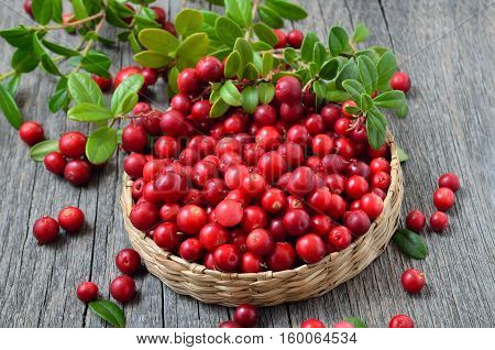 Red lingonberry in wicker basket on rustic surface close up