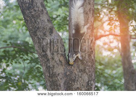 squirrel clinging to a tree. Squirrel nature