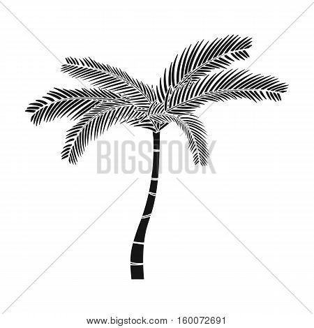 Mexican fan palm icon in black style isolated on white background. Mexico country symbol vector illustration.